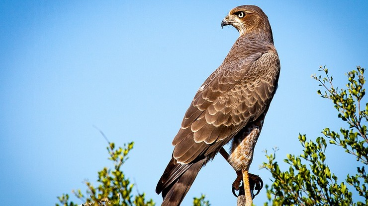 Drapieżne ptaki mają wygonić zanieczyszczające radomskie parki gawrony. Za 80 tys. zł