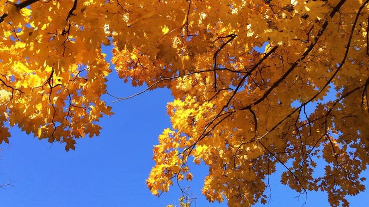A jednak złota polska jesień? W przyszłym tygodniu może być nawet 20 stopni