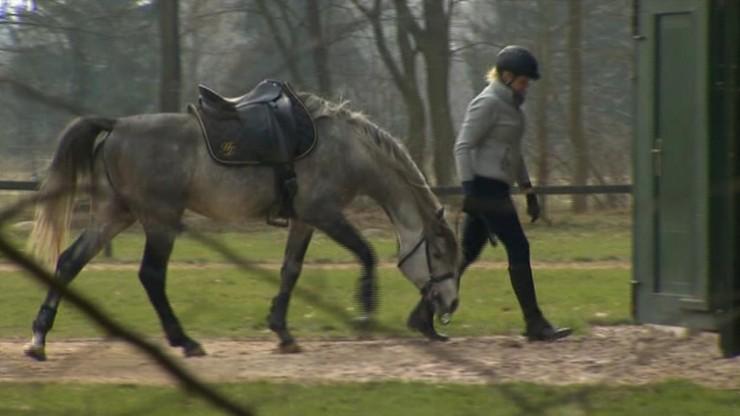 Specjaliści odchodzą ze stadniny w Janowie Podlaskim
