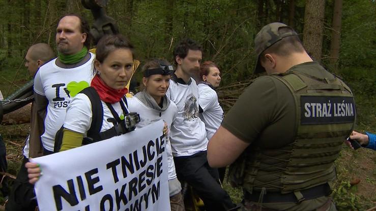 Prokuratura otrzymała zawiadomienia dotyczące interwencji Straży Leśnej w Puszczy Białowieskiej