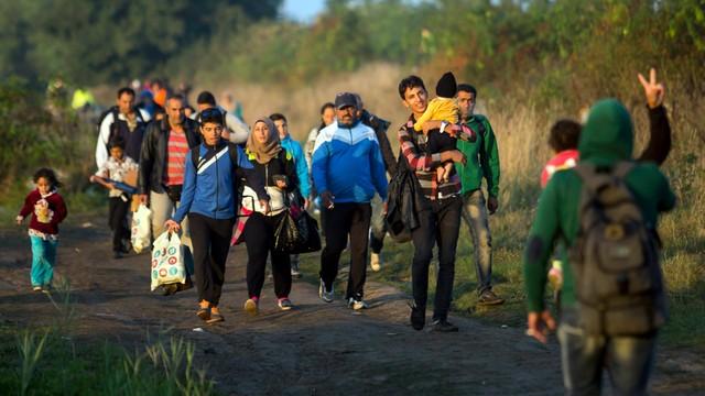 Kolejny rekord migrantów na granicy serbsko-węgierskiej