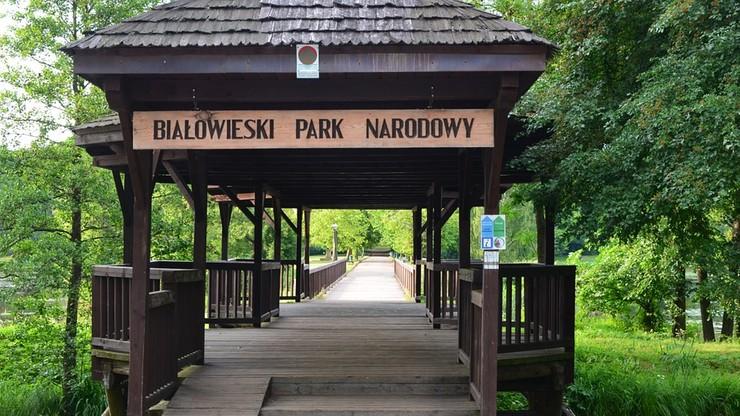"""Dyrektor Białowieskiego Parku Narodowego odwołana przez Szyszkę. """"Minister miał do tego prawo"""""""