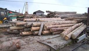 Nie ma chętnych na drewno po nawałnicy. Cena odstrasza nabywców