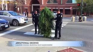 Aresztowali drzewo: człowiek-choinka blokował ruch samochodów