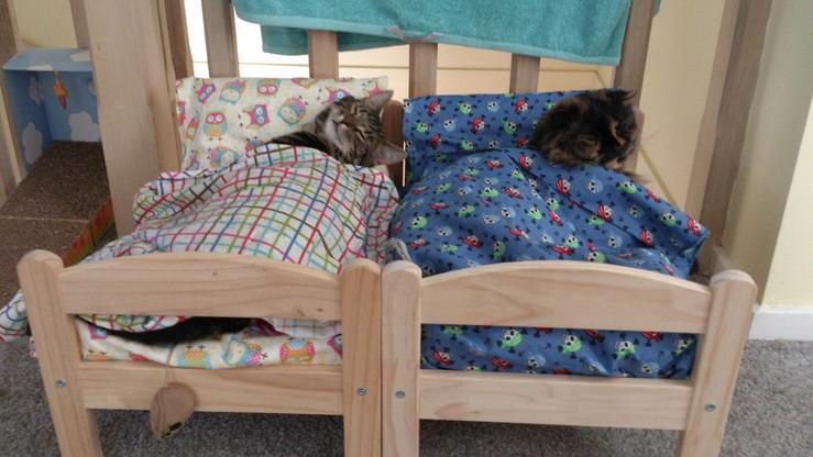 IKEA podarowała przytulisku dla kotów łóżeczka dla lalek. Rozczulające zdjęcia