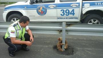 26-01-2016 08:44 Ekwador: policjanci uratowali przestraszonego leniwca