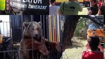 """05-07-2016 21:00 Okaleczony niedźwiedź zabrany właścicielowi cyrku. """"Służył tylko do sztuczki z popcornem!"""""""