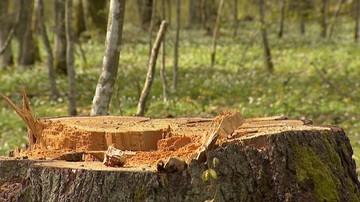 22-05-2017 12:50 Gigantyczna kara za nielegalną wycinkę drzew. Właściciel działki musi zapłacić niemal 15 mln zł