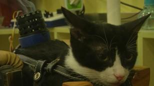 Akupunktura dla zwierząt. Ratunek dla chorych czworonogów