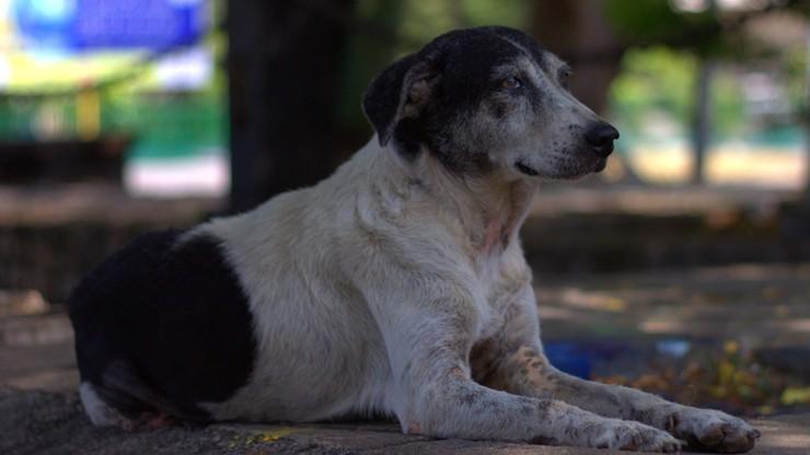 Pies w areszcie domowym za niszczenie aut
