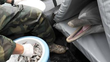 Polskie morświny będą chronione