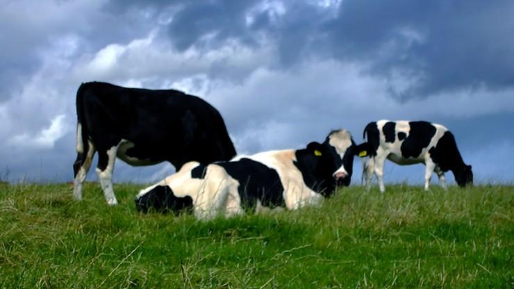 Resort rolnictwa pracuje nad przepisami wspierającymi rolników