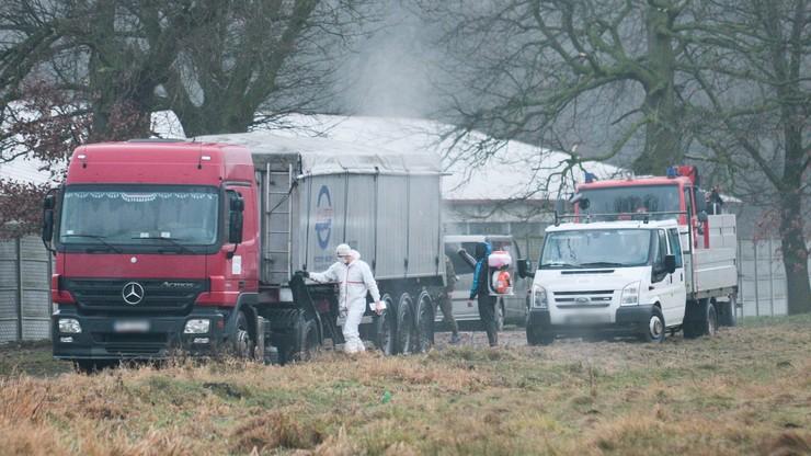 Coraz więcej ognisk ptasiej grypy w Polsce