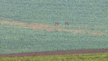 Obrońcy zwierząt i rowerzyści przepłoszyli myśliwych. Udana blokada polowania w Kołbaskowie