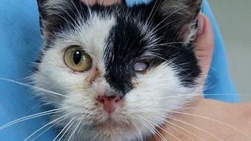 16-06-2016 15:42 Dziewczynka uderzała głową kota o ścianę. Dorośli nie reagowali