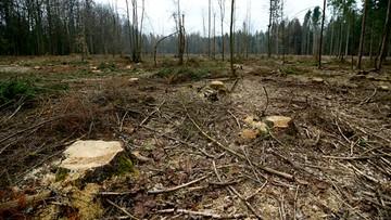 19-04-2016 18:47 KE zaniepokojona decyzją o wycince w Puszczy Białowieskiej