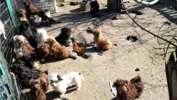 13-11-2017 14:15 Dwa lata znęcała się nad ponad setką psów. Właścicielka hodowli odpowie przed sądem