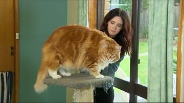 Poznajcie Omara. To najprawdopodobniej najdłuższy kot na świecie
