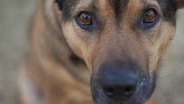 15-11-2016 12:47 Więźniowie pomogą schroniskowym psom