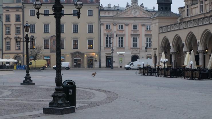 2016-03-08 Rankiem po krakowskim Rynku Głównym biegał lis