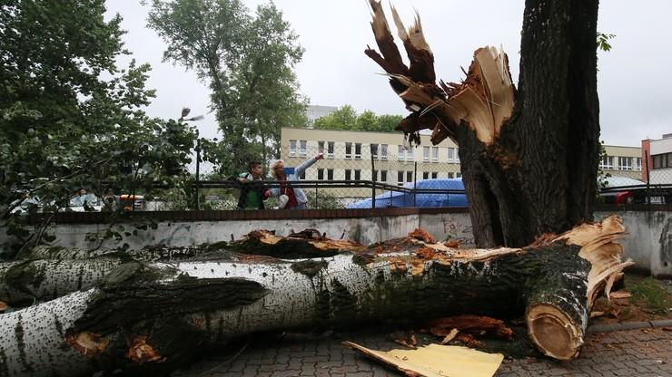 Nawałnice nad Polską: ofiary, ranni, tysiące powalonych drzew