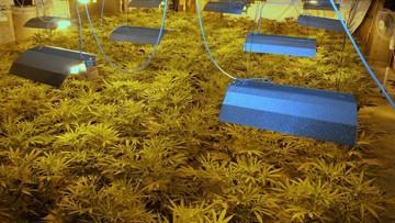 08-06-2017 09:50 Policja przejęła 42 kg marihuany o wartości 3 mln złotych