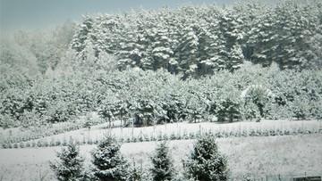 2016-12-02 Ośnieżony las w Szczytnie