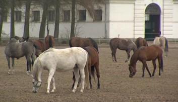 08-04-2016 20:01 Shirley Watts chce pozwać polskie władze w związku ze śmiercią jej koni