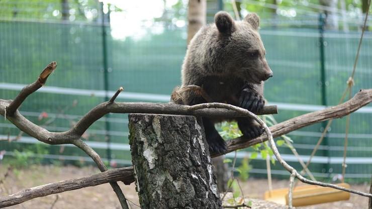 Wizerunek niedźwiedzicy Cisnej na ubrankach dla dzieci