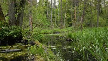 19-07-2016 08:16 Resort środowiska przesłał KE odpowiedź ws. Puszczy Białowiejskiej. Treść poufna