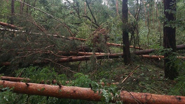 2016-09-05 Dziesiątki połamanych drzew. Skutki nawałnicy w Puszczy Bolimowskiej