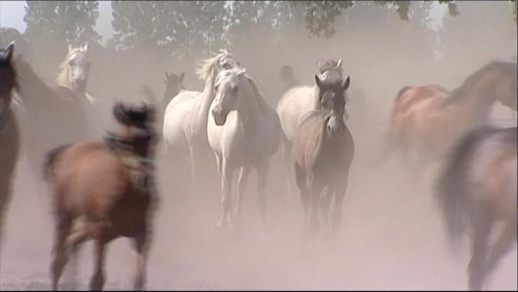 Doświadczeni szefowie stadnin koni odwołani. Nowi nigdy nie siedzieli w siodle