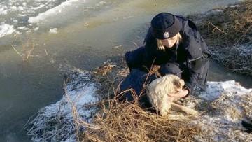 10-01-2017 19:10 Policjanci uratowali tonącego w rzece psa