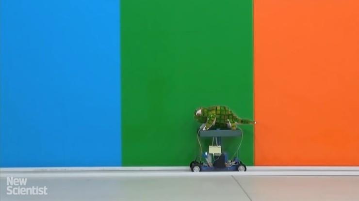 Kamuflaż staje się rzeczywistością. Naukowcy prezentują robota, który zmienia kolor jak kameleon